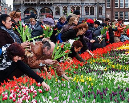 Plaza DAM-día nacional del Tulipán-