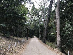 Entrada Parque Tikal
